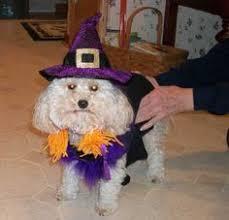 Bewitched Halloween Costume Werewolf Dog Halloween Costume Dog Halloween Dog Supplies Dog