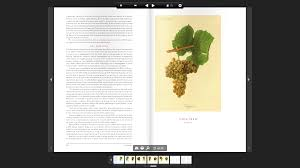 sample page from wine grapes spittoon