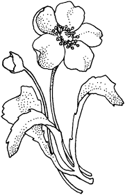 printable free poppies coloring pages free coloring book picture