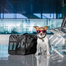 traveling with pets images Traveling with pets seaborne airlines jpg