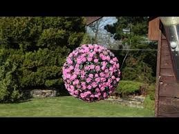 Light Up Topiary Balls - pink flower solar topiary ball with 20 warm white leds youtube