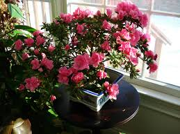 what are your favorite indoor plants page 3 gardening forums