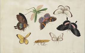 butterfly photo album paul k insects