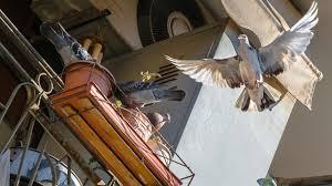 taubenabwehr balkon taubenabwehr tauben balkon und fenster vertreiben