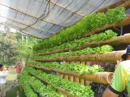 hydroponic gardening indoor hydroponic gardening supplies