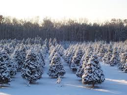 landis tree farm