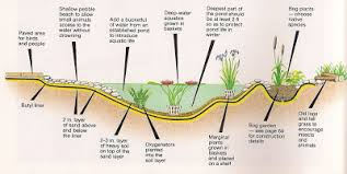 Is A Backyard Pond An Ecosystem Permaculture Pond Permaship