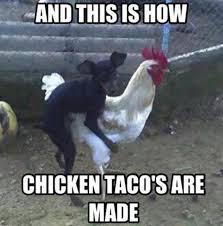 Funny Chicken Memes - animal memes chicken tacos funny memes