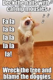 Christmas Cat Memes - christmas cats b for bel