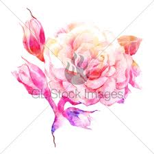 rose gl stock images
