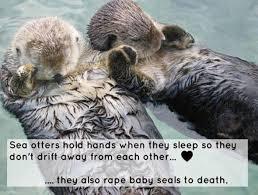 Sea Otter Meme - sea otters meme xyz