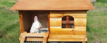 Best Rabbit Hutches Best Luxury Outdoor Rabbit Hutches Uk Result Compare