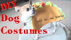 halloween costumes culver city diy halloween dog costumes nic and pancho collaboration youtube