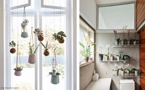 indoor plant display bring the outdoors in with our favorite ways to display house