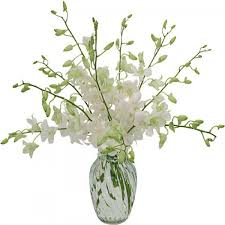 white dendrobium orchids white dendrobium orchids flowers to ontario canada delivery