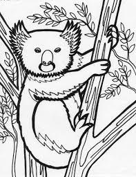 koala bear coloring page animal cute koala coloring pages womanmate com