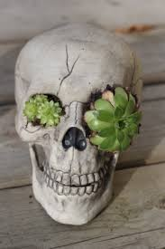 skull succulent planter