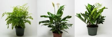 popular houseplants