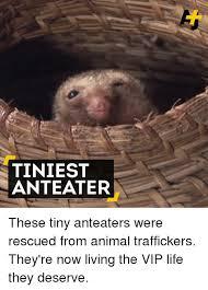 Anteater Meme - 25 best memes about anteater anteater memes