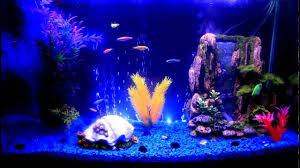 glofish danios tetra hd tanked fish tanks