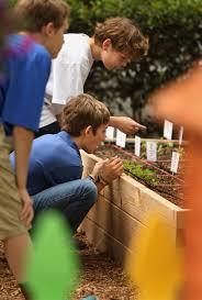 norfolk collegiate students plant garden harvest crops for
