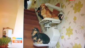 Stannah Stair Lift For Sale by Dogs Dachshunds On Stairlift Daybreak Itv1 Youtube