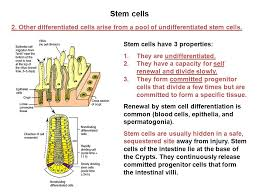 Tissue Renewal Regeneration And Repair Cell Differentiation And Regeneration The Number Of Cells From Any