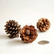 Pine Cone Home Decor Online Get Cheap Planting Pine Cones Aliexpress Com Alibaba Group