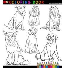 newfoundland dog cartoon for coloring book vector image