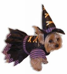 Halloween Costumes Small Dogs Cute Halloween Costumes Small Dogs Love Chi