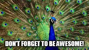 Peacock Meme - don t forget to be awesome imgflip