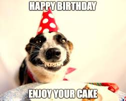 Funny Animal Birthday Memes - top 30 cute happy birthday meme dog birthday wishes quotes