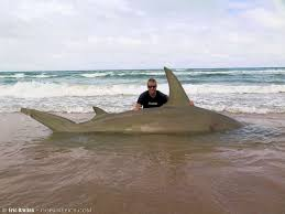 halloween city corpus christi texas fisherman facebook removed photo of huge hammerhead shark
