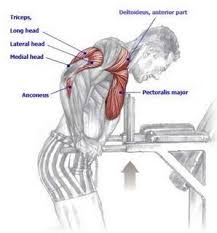 decline bench press muscles are there any substitutes for decline bench press quora