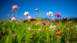 live hd themes for pc free spring desktop wallpaper download free spring wildflowers