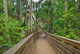 black hammock wilderness area florida hikes
