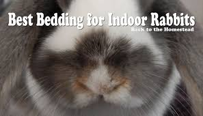 best rabbit bedding for indoor bunnies