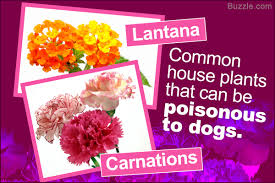 a list of common plants that are toxic and can make dogs sick