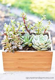 planter for succulents succulent planter box ikea hack a pumpkin and a princess