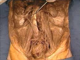 Abdominal Anatomy Quiz Abdomen Quiz Question 135