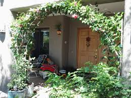 the mandevilla vines grow back and forth along the top of the
