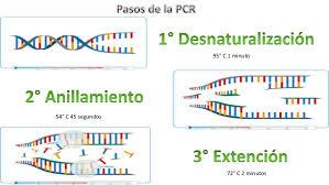 bureau de la pcr bureau de la pcr 51 images techniques du génie génétique pcr