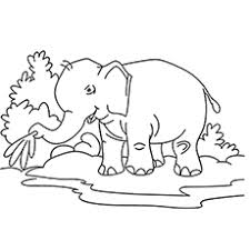 20 free printable elephant coloring pages