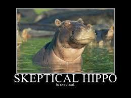 Hippo Memes - skeptical hippo memes