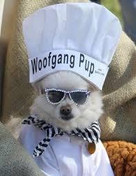 Halloween Costume Ideas Dogs Easy Olaf Costume Dog Kids White