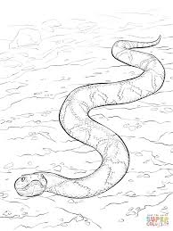 southern copperhead snake coloring page free printable coloring
