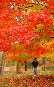 how why do leaves change color mental floss