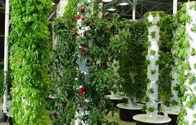 Vertical Garden Why Vertical Gardening Is Awesome And How To Do It For Next To