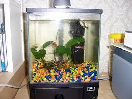 Cool Buy Fish Tank Cool Small Fish Tanks Roselawnlutheran Cheap Tank Trees