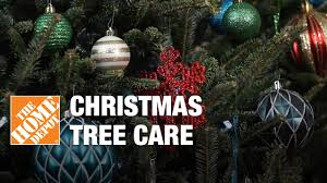 christmas tree care real fresh cut christmas trees youtube